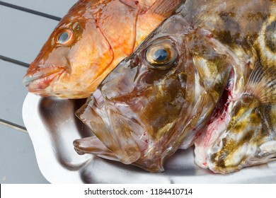 Ballan wrasse and St Pierre on a pewter dish after fishing in Brittany