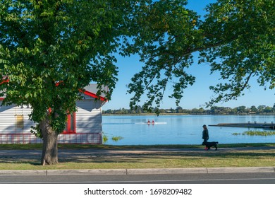 Ballarat Australia - March 16 2020;  Rowers on lake and woman walking dog in shade or oak trees on lake edge by rowing club boatshed.