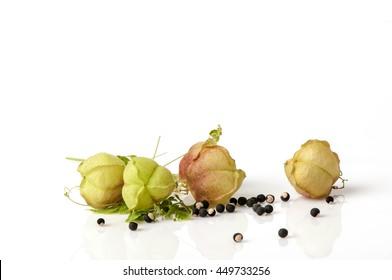 Balloon vine, Heart pea, Heart seed, Smooth leaved Heart Pea (Cardiospermum Halicacabum Linn.) Herbs with medicinal properties.