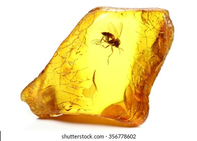 baltic amber with a fungus gnat (mycetophilidae) isolated on white background