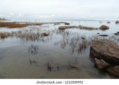 Baltic coastline near Tallin Tabasalu, Estonia, Baltics,  Beach meadows, stones with sea salt adherence and reeds under a partly cloudy sky