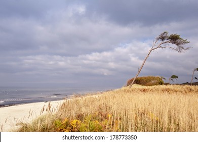 Baltic Sea coast of Darss in Germany