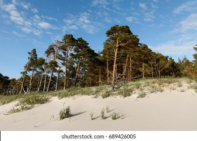 Baltic sea coastline in Latvia. Sand dunes with pine trees and clouds. Classical Baltic beach landscape. Wild nature