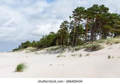 Baltic sea coastline near Liepaja, Latvia. Sand dunes with pine trees. Classical Baltic beach landscape. Wild nature