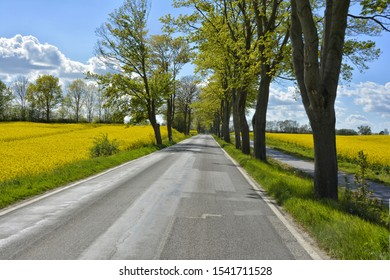 Baltic Sea country road lined by trees