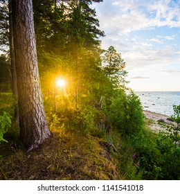 Baltic seacoast at sunset. Pine forest and the sea in the background, Latvia