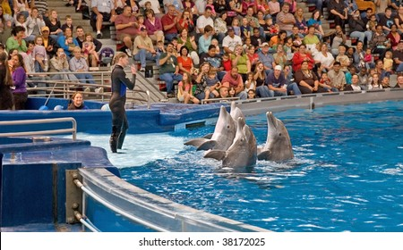 BALTIMORE, MD - SEPT 11: An unidentified woman trainer is showing four live dolphins as they perform tricks in front of happy crowds on September 11, 2009 in Baltimore, MD.