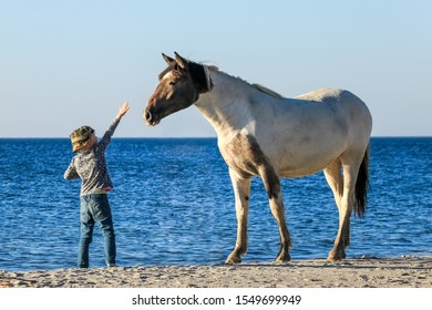 Baltiysk, Kaliningrad region/Russia-08 08 18: child and horse at sea