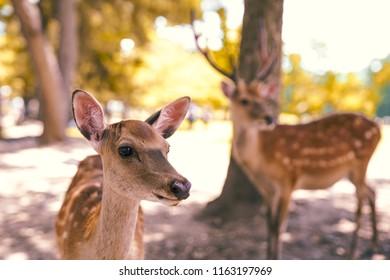 Bambi deers in Japanese Nara park - July 2018