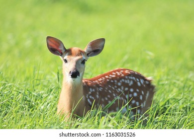 Bambi in the grass