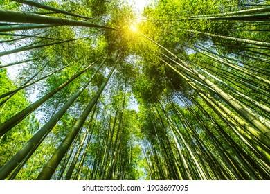bamboo area mountain in Shunan Bamboo Sea national park in yibin,Sichuan province,China