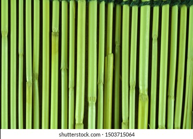 Bamboo and for in background
