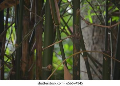 bamboo background in back garden