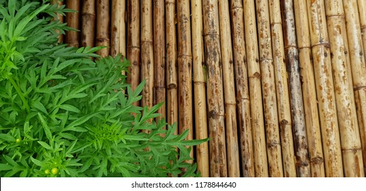 Bamboo backgrounds and texture.