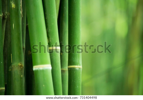 Bamboo Bamboos Forest Bamboo Design Over Stock Photo Edit Now