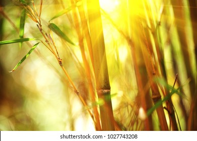 Bamboo. Bamboos Forest. Growing bamboo border design over blurred sunny background. Sun flare