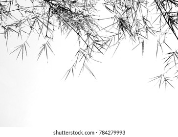 Bamboo branch of summer in black and white.