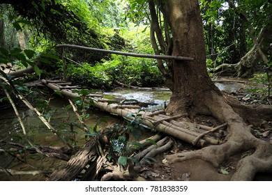 Bamboo bridge cross the stream look so nature