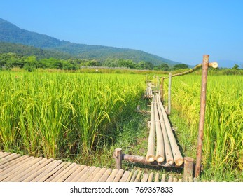 Bamboo bridge in the middle of the field