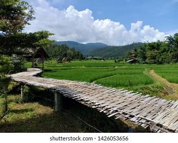 Bamboo bridge on rice fields in Pai