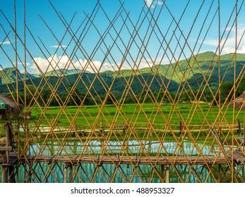 bamboo bridge in rice field, Nan province, Thailand