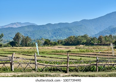 Bamboo bridge walkway, background field and mountain view.