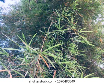 bamboo bushes leaves and tree trunks