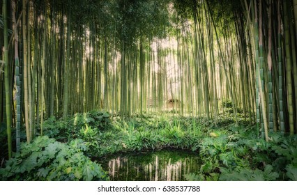 Bamboo canes around a small lake in the Garden of Ninfa in the province of Latina, Italy, Europe