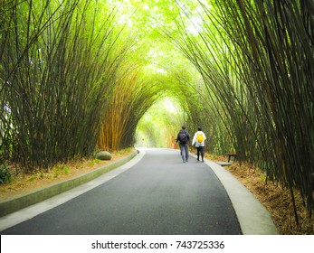 Bamboo Cave Walkway in Chengdu Research Base of Giant Panda Breeding