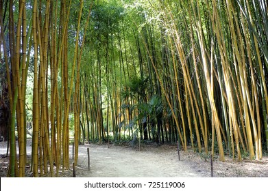Bamboo forest in the Anduze bamboo plantation in the French department of Gard