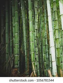 Bamboo Forest Arashiyama, Japan, Kyoto