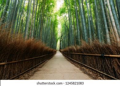 The Bamboo Forest of Arashiyama, Kyoto
