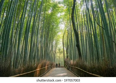 Bamboo forest in Arashiyama, Kyoto, Japan.