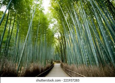 Bamboo Forest Arashiyama, kyoto Japan