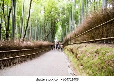 Bamboo Forest, Arashiyama, Kyoto, Japan, 02-10-2014