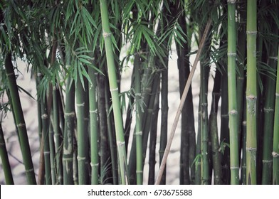 bamboo forest, bamboo background