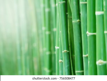 Bamboo Forest for background