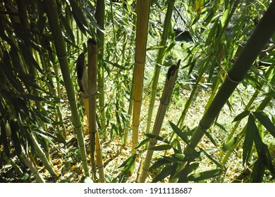 Bamboo forest background in italy