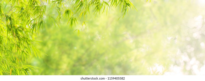 Bamboo forest & green meadow grass with natural light in blur style. Bamboos green leaves &  bamboo tree with bokeh in nature forest. Nature view of green leaf on blurred greenery background in garden