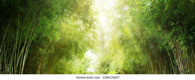 Bamboo forest and green meadow grass with natural light in blur style. Bamboos green leaves and bamboo tree with bokeh in nature forest. Nature pattern view of leaf on blurred greenery background.