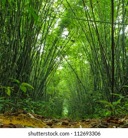 Bamboo forest. Jungle background in Thailand