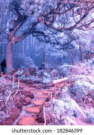 Bamboo Forest, Kamakura, Japan. Extended Infrared photo.