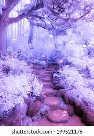 Bamboo Forest, Kamakura, Japan. Extended infrared.