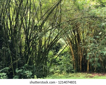 Bamboo forest landscape