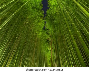 Bamboo Forest Night in Japan, Arashiyama, Kyoto