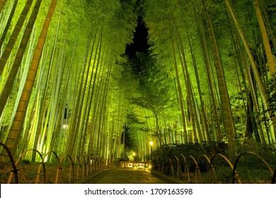 Bamboo forest at night, Shuzenji, Izu City, Shizuoka Prefecture