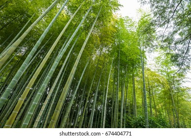 Bamboo forest in the park.