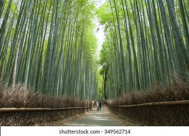 Bamboo forest path, Kyoto, Japan