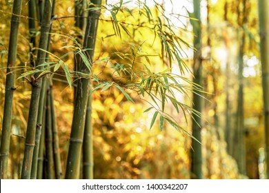 Bamboo forest and sunlight in nature