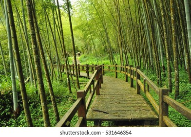 bamboo forest Taiwan